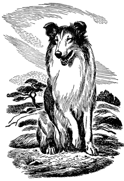 'Sitting Rough Collie', frontispiece in 'His Dog' (1922) by Albert Payson Terhune