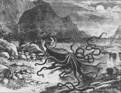 Giant squid that washed ashore at Trinity Bay, Newfoundland in 1877. Published in 'Canadian Illustrated News', October 27, 1877.