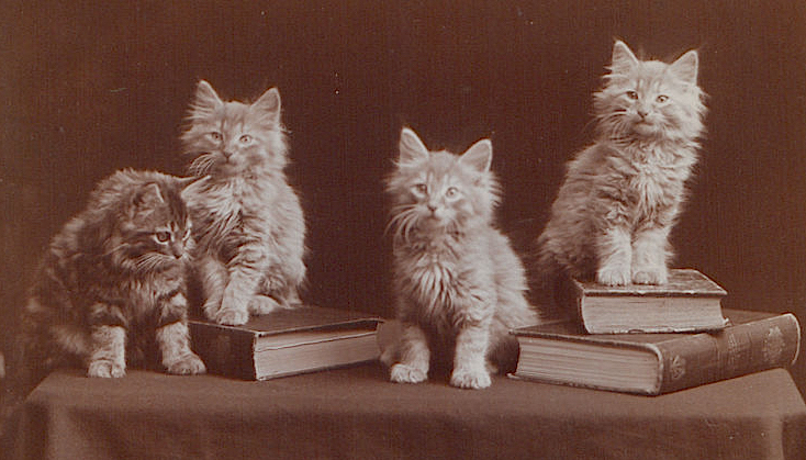 'The Globe kittens' by Ernest J Rowley (1902)