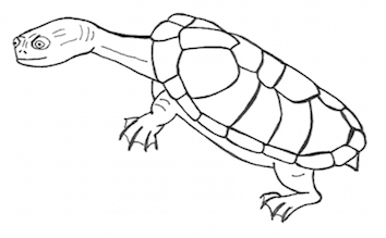 'Dr Huxley's Bequest' turtle illustration